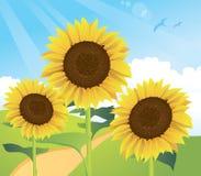 Paesaggio del fiore di Sun Fotografie Stock