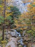 Paesaggio del fiume della montagna Fotografia Stock