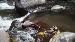 Paesaggio del fiume della montagna della natura, vista di una corrente, insenatura, ruscello archivi video