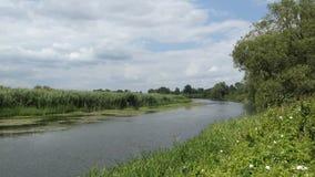 Paesaggio del fiume di Havel ad ora legale in Havelland Brandeburgo Germania Alberi di salice lungamente il fiume video d archivio