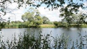 Paesaggio del fiume di Havel (Brandeburgo Germania) lungo Havelradweg (percorso della bici di Havel) stock footage