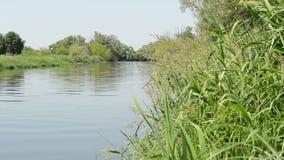 Paesaggio del fiume di Havel nella primavera Alberi di salice sulla riva Regione di Havelland in Germania stock footage