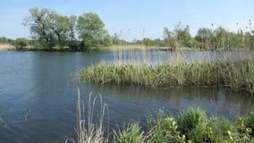 Paesaggio del fiume di Havel nella primavera Alberi di salice sulla riva Regione di Havelland in Germania video d archivio
