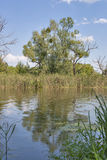 Paesaggio del fiume di ROS Immagini Stock Libere da Diritti