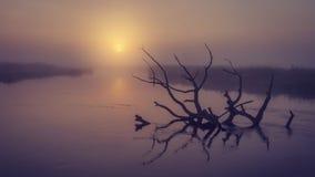 Paesaggio del fiume su alba nebbiosa di mattina Vecchio albero asciutto in acqua nell'alba nebbiosa iniziale Fiume scenico Fotografie Stock