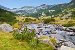 Paesaggio del flusso della montagna di Pirin Fotografie Stock