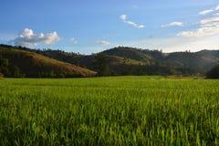 Paesaggio del giacimento del riso Fotografia Stock Libera da Diritti