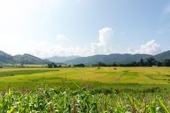 Paesaggio del giacimento del riso, area di agricoltura in Tailandia Immagini Stock