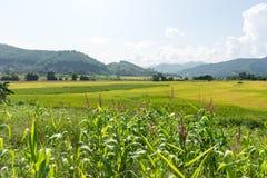 Paesaggio del giacimento del riso, area di agricoltura in Tailandia Fotografia Stock