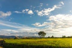 Paesaggio del giacimento del riso, area di agricoltura in Tailandia Fotografia Stock Libera da Diritti