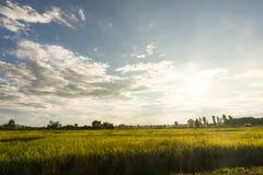 Paesaggio del giacimento del riso, area di agricoltura in Tailandia Immagine Stock Libera da Diritti