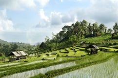Paesaggio del giacimento del riso in bali Indonesia Fotografia Stock Libera da Diritti