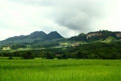 Paesaggio del giacimento del riso e della montagna Fotografia Stock Libera da Diritti
