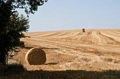 Paesaggio del giacimento di grano con la balla della paglia in priorità alta Fotografia Stock