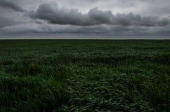 Paesaggio del giacimento di grano crudo Immagini Stock