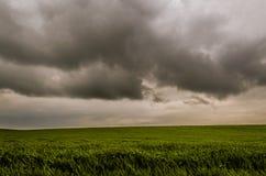 Paesaggio del giacimento di grano crudo Immagini Stock Libere da Diritti