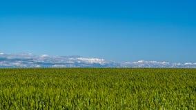 Paesaggio del giacimento di grano un bello giorno Fotografia Stock Libera da Diritti