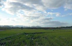 Paesaggio del giacimento e della catena montuosa del riso con il fondo del cielo blu nel Giappone Fotografia Stock
