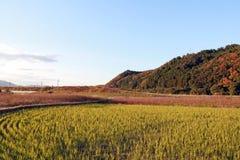 Paesaggio del giacimento e della catena montuosa del riso con il fondo del cielo blu nel Giappone Immagini Stock Libere da Diritti