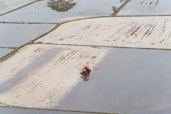 Paesaggio del giacimento del riso su risaia e sul trattore Fotografia Stock Libera da Diritti