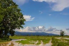 Paesaggio del giacimento del riso, Tailandia Fotografia Stock