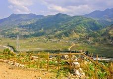 Paesaggio del giacimento a terrazze del riso Immagini Stock