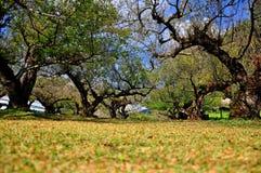 Paesaggio del giardino del susino. Immagine Stock