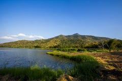 Paesaggio del giardino di tè Fotografia Stock