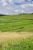 Paesaggio del Hayfield immagini stock libere da diritti