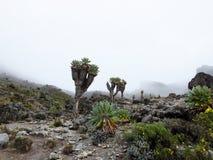 Paesaggio del Kilimanjaro Immagini Stock Libere da Diritti