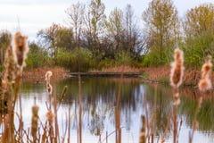 Paesaggio del lago e delle canne Fotografia Stock