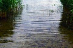 Paesaggio del lago Miedwie, Stargard, Polonia Fotografia Stock