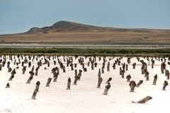 Paesaggio del lago salt Immagine Stock