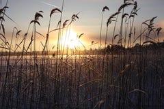 Paesaggio del lago winter Immagine Stock Libera da Diritti