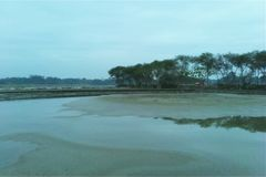 Paesaggio del lato del fiume di mattina immagine stock libera da diritti
