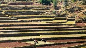 Paesaggio del Madagascar Fotografia Stock