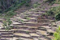 Paesaggio del Madagascar, risaie Fotografia Stock Libera da Diritti