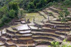 Paesaggio del Madagascar - risaie Fotografia Stock Libera da Diritti
