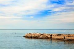 Paesaggio del mare Gruppo di gabbiani che si siedono sul frangiflutti Immagini Stock