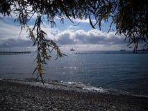 Paesaggio del mare, un ramo della mimosa sui precedenti del mare fotografia stock libera da diritti
