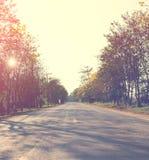 Paesaggio del modo di strada di estate con la foresta dell'albero, Fotografia Stock Libera da Diritti