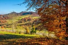 Paesaggio del mounrain di autunno con il prato ed alberi sul pendio di collina Fotografia Stock Libera da Diritti