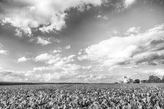 Paesaggio del mulino a vento dell'Olanda Fotografie Stock