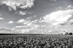 Paesaggio del mulino a vento dell'Olanda Immagine Stock