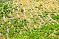 Paesaggio del muretto a secco Fotografia Stock Libera da Diritti
