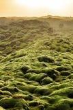 Paesaggio del muschio di Eldhraun fotografia stock