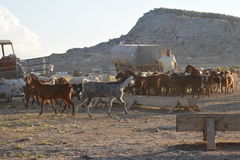 Paesaggio del nord degli agricoltori del Cipro Immagine Stock