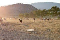Paesaggio del nord degli agricoltori del Cipro Fotografia Stock