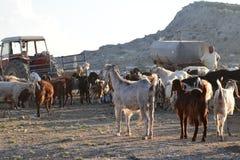 Paesaggio del nord degli agricoltori del Cipro Fotografie Stock Libere da Diritti