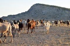 Paesaggio del nord degli agricoltori del Cipro Immagini Stock